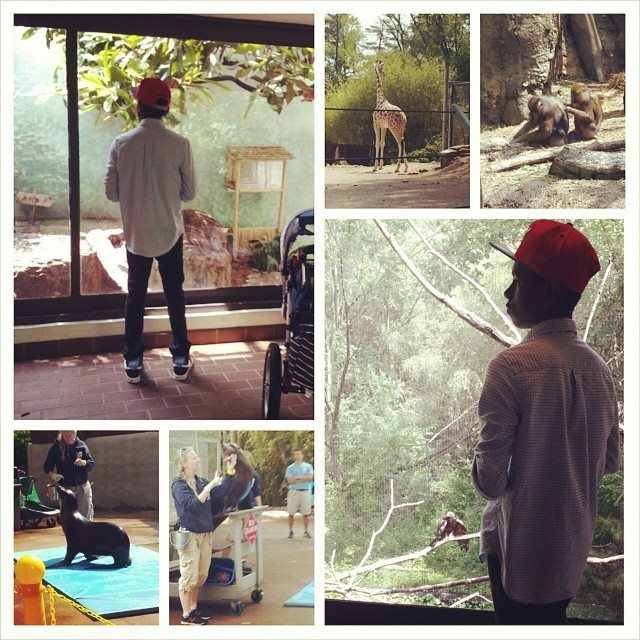 Fun time at the Birmingham zoo! Eric LOVED the snakes! and lion.