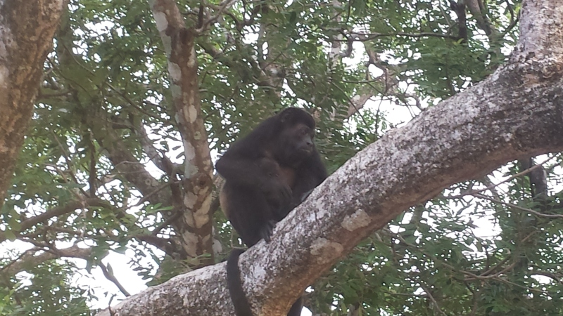 We saw monkeys just hanging out at the beach!